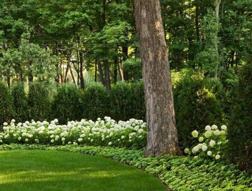 Tuin met ronde vormen