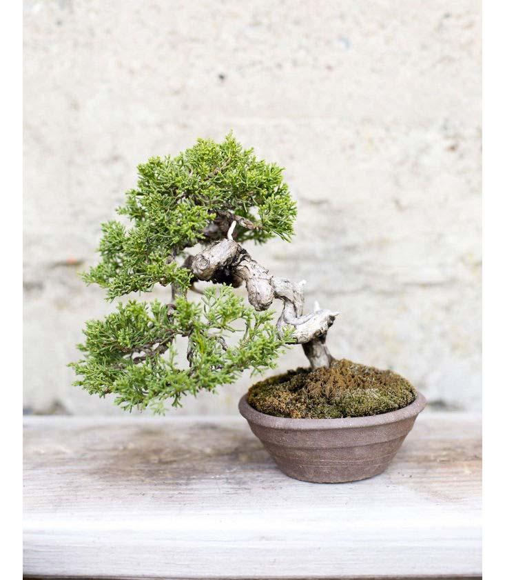 bonsai boom pot