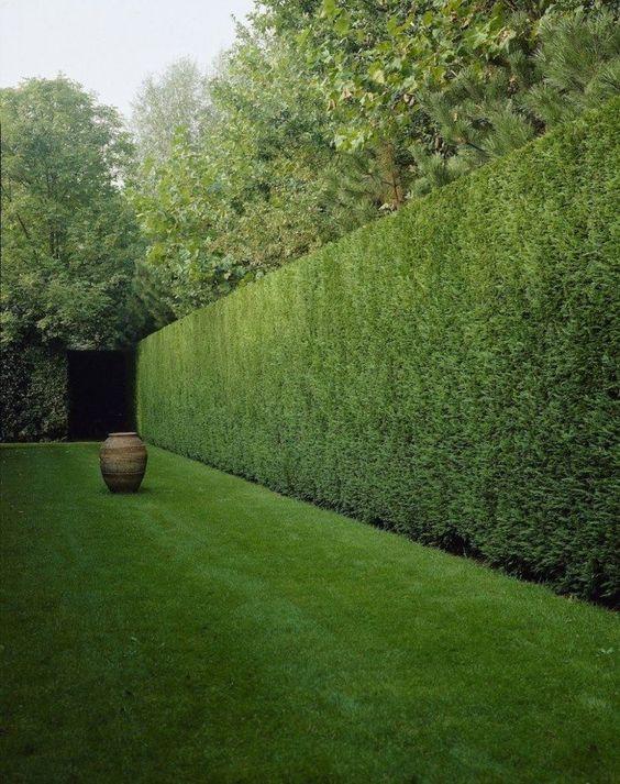 groene tuinafscheiding