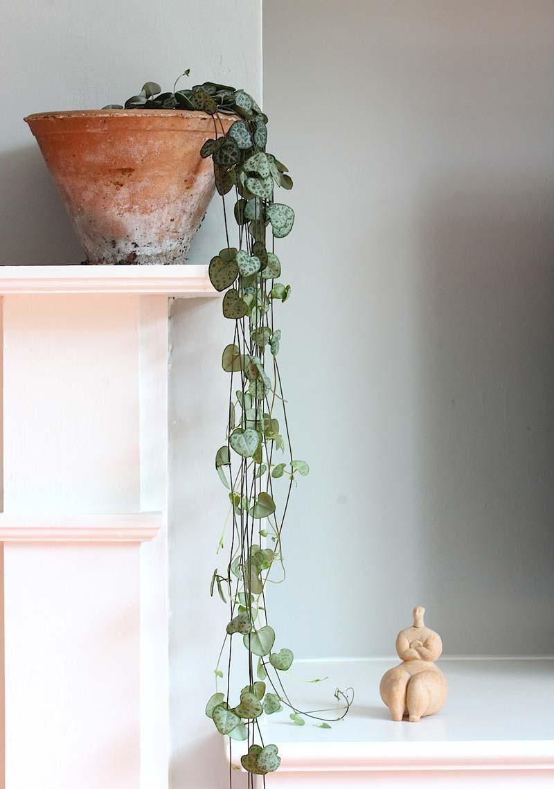 hangplant chinees lantaarnplantje in terracotta potje op schouw
