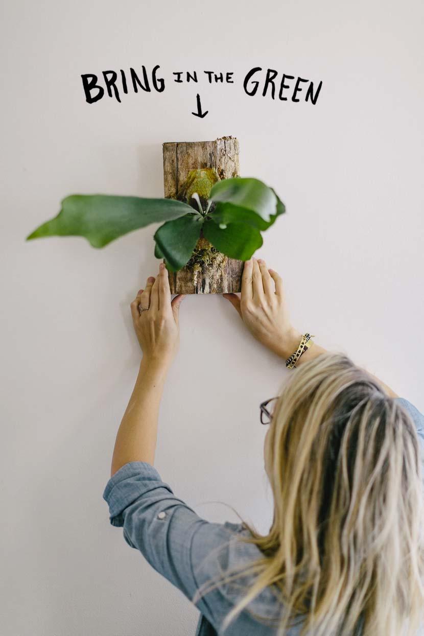 hertshoornvaren aan de muur ophangen boomstam plankje