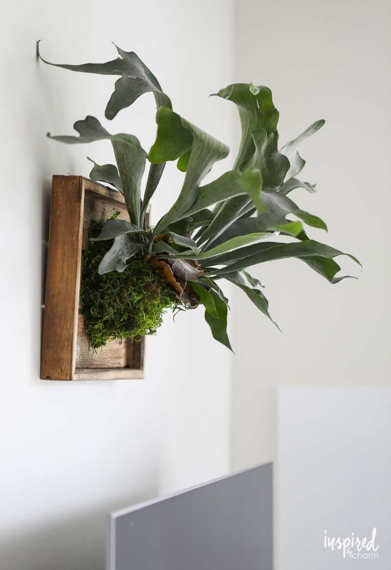 hertshoornvaren aan de muur ophangen houten dienblad
