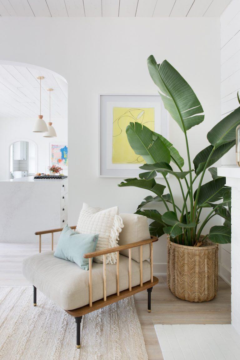 housewarming cadeau paradijsvogel plant in mand