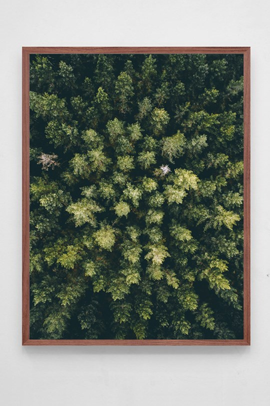 In the Forest poster Airpixels