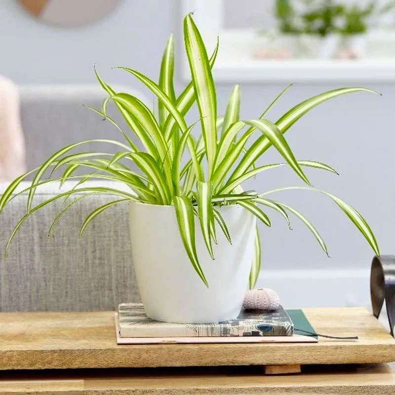 niet giftige planten voor katten graslelie