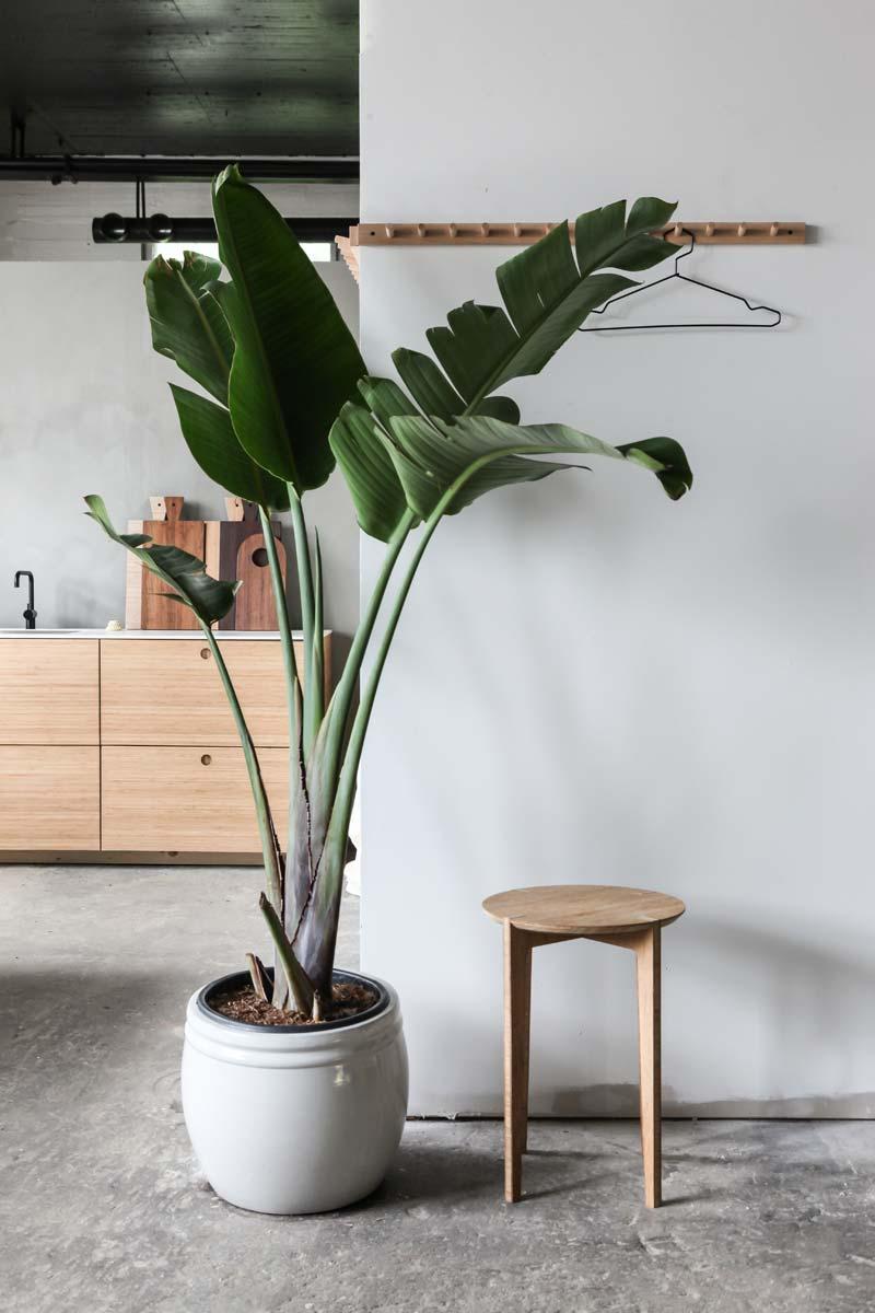 Paradijsvogel plant keuken