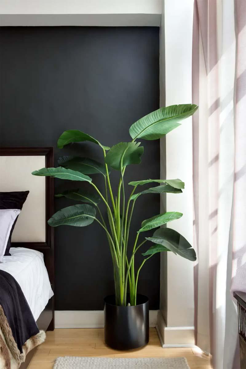 Paradijsvogel plant slaapkamer