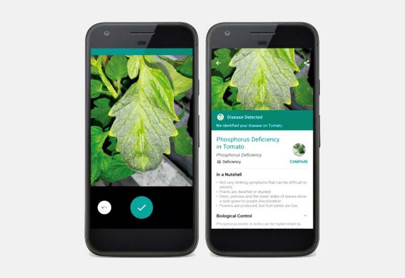 planten herkennen app plantix