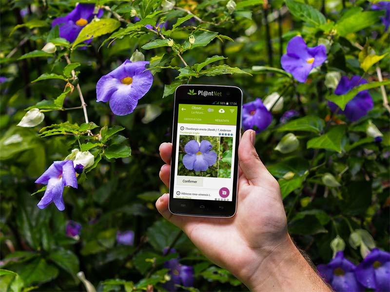 planten herkennen app plantnet