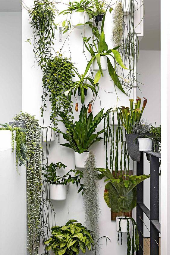 plantenwand inspiratie