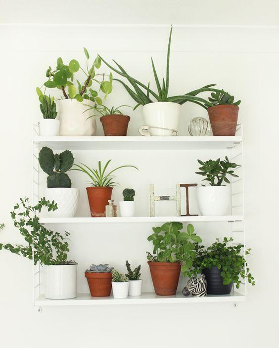 plantenwand planten wandplanken