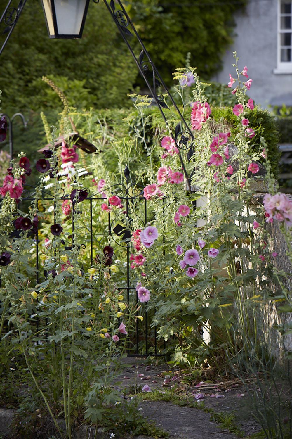 stokrozen bloemen
