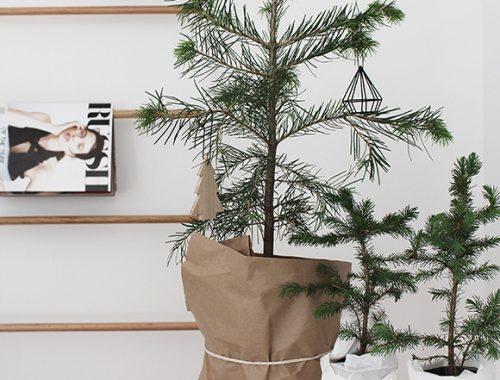 Verzameling kerstboompjes bij elkaar