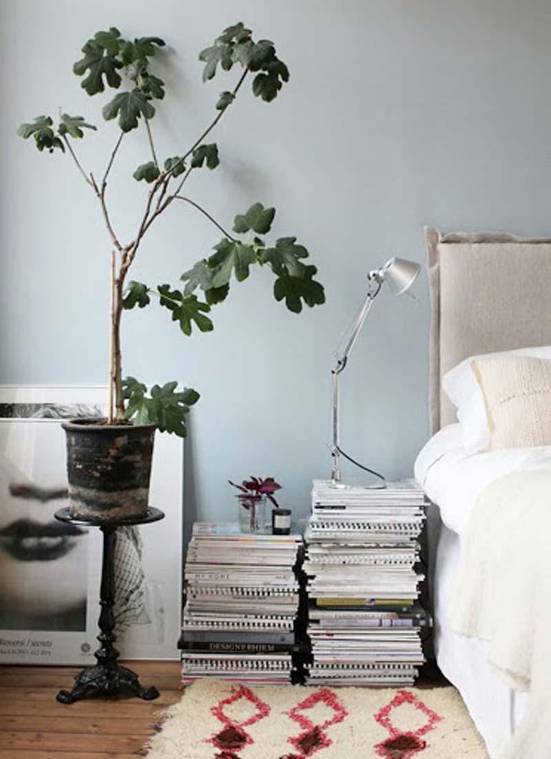 vijgenboom in slaapkamer